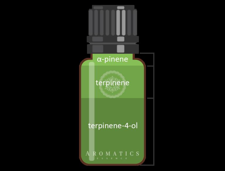 Çay Ağacı Infografik_Aromatics Essence